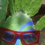 Cactus with red Barn's glasses