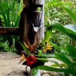 Kalinago cane squeezer at the Crusoe cottage