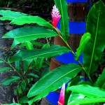 Royal palm and pink ginger lily