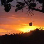 Lemon and sunset