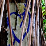 Blue heart under the bakoua tree