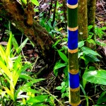 Small blue palm