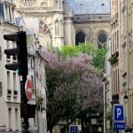 Going down the street, Notre Dame de Paris
