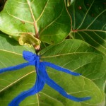 B's blue man on a sea grape leaf