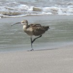 Bird on the beach.