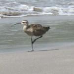 Bird on the beach.