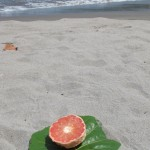 Grapefruit on the beach