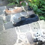 Dog gang on the steps at home.